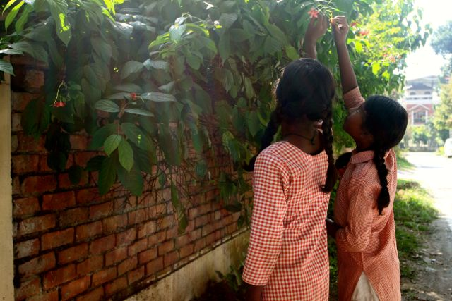 Two girls in school uniforms plucking flowers from a large bush