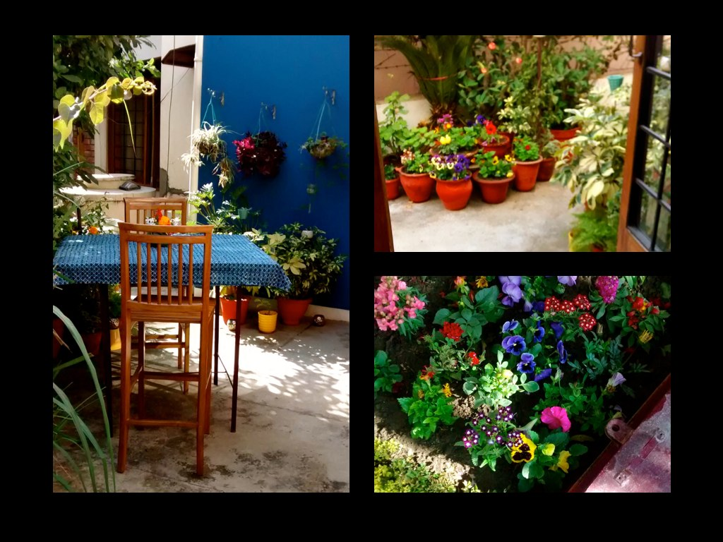 Three photos of flowers and gardens